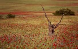 61-flores-marchitas