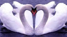 70-ecencia-de-amor